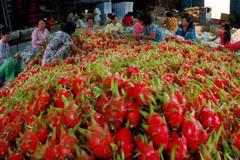 Cùng nông dân đi chợ thế giới sẽ tạo sức bật cho người nông dân giảm nghèo
