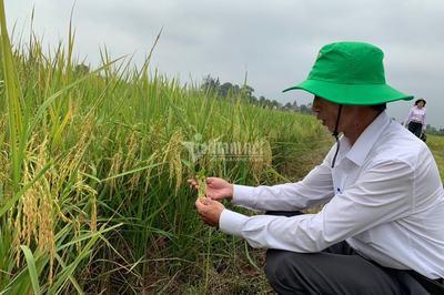 Miễn, giảm thuế sử dụng đất nông nghiệp: Tiếp sức cho chương trình XĐGN