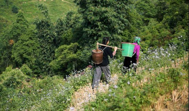 bỏ phố về quê,khởi nghiệp,tỷ phú nông dân
