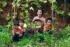 Cuộc sống bình yên, không cần đến tiền của cô gái Đắk Lắk 'bỏ phố về rừng'