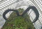 Du khách mê mẩn với 'khu vườn trên mây' ở Singapore