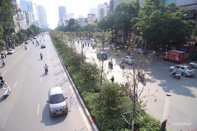 Hà Nội xin cơ chế đặc thù trồng 600.000 cây xanh không qua đấu thầu