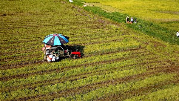 Land policies restrain Vietnam agricultural development