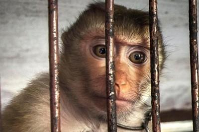 Động vật loạn trí vì bị nhốt trong sở thú