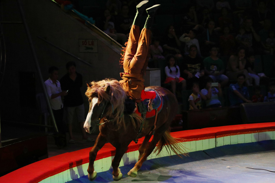 Chiêm ngưỡng 'tài năng vàng' của nghệ thuật xiếc tại Đà Nẵng, TP.HCM