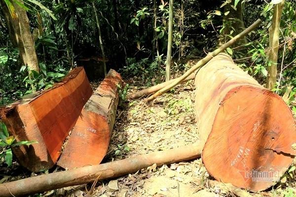 phá rừng,quảng bình
