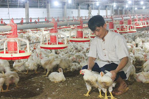 Ăn nhậu kiểu dân Việt, hàng chục triệu USD nhập chân gà đông lạnh