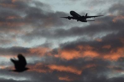 Video chim nổ tan xác khi va vào máy bay Nga