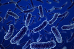 Bacillus- bào tử lợi khuẩn hỗ trợ đắc lực người viêm đại tràng