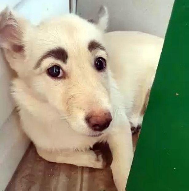 Chú chó có cặp 'lông mày' cực đỉnh gây bão mạng xã hội