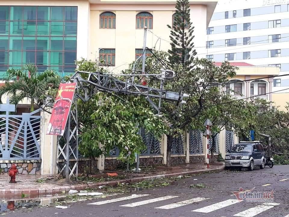 Bình Định tả tơi, cây bật gốc la liệt sau bão số 5