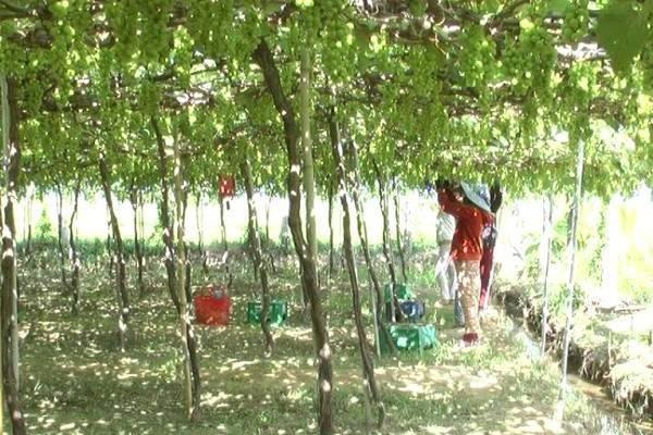 Ninh Thuận: Sau đào tạo, nhiều nông dân tự mạnh dạn chuyển đổi nghề