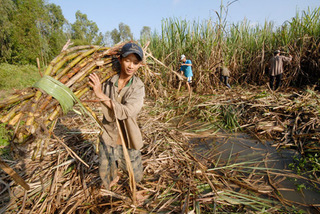 Illegally-imported sugar products threaten Vietnamese firms