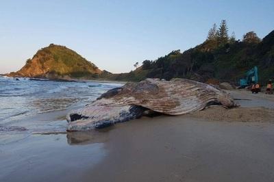 Mồ chôn xác cá voi sủi bọt bất thường với khí đỏ như máu