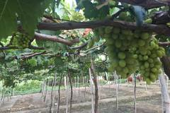 NTM Ninh Thuận về đích trước 1 năm, nông dân đổi đời