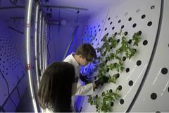 Séc thử nghiệm trồng rau trong môi trường khắc nghiệt giống Sao Hỏa