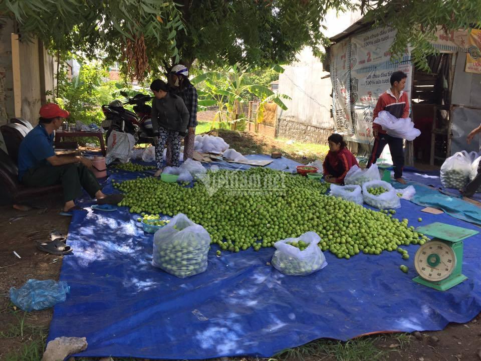 Ninh Thuận phấn đấu có huyện đầu tiên đạt chuẩn Nông thôn mới