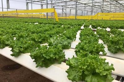 Xây dựng NTM kiểu mẫu: Lâm Đồng ưu tiên phát triển nông nghiệp 4.0