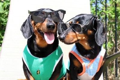 Vợ bỏ và chỉ còn 1 con chó, cuộc đời đổi thay giàu có không ngờ