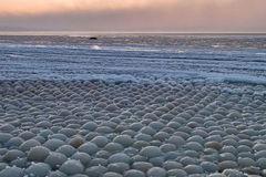 Hàng ngàn quả 'trứng' kỳ quái dạt vào bờ biển