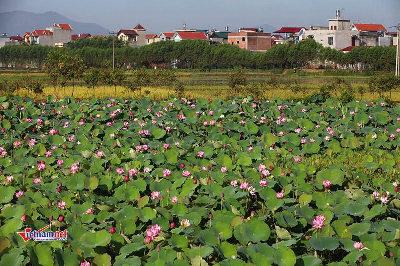 Bộ trưởng Nguyễn Xuân Cường: Đưa sản phẩm lụa tơ sen vào chương trình OCOP