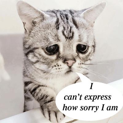 "Langmaster: 40 câu ""xin lỗi"" hay nhất trong tiếng Anh"