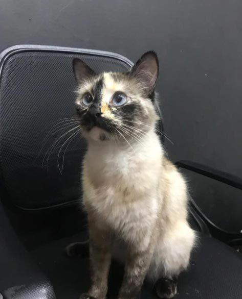 mèo nhà,động vật,chuyện hy hữu,mèo cứu chủ