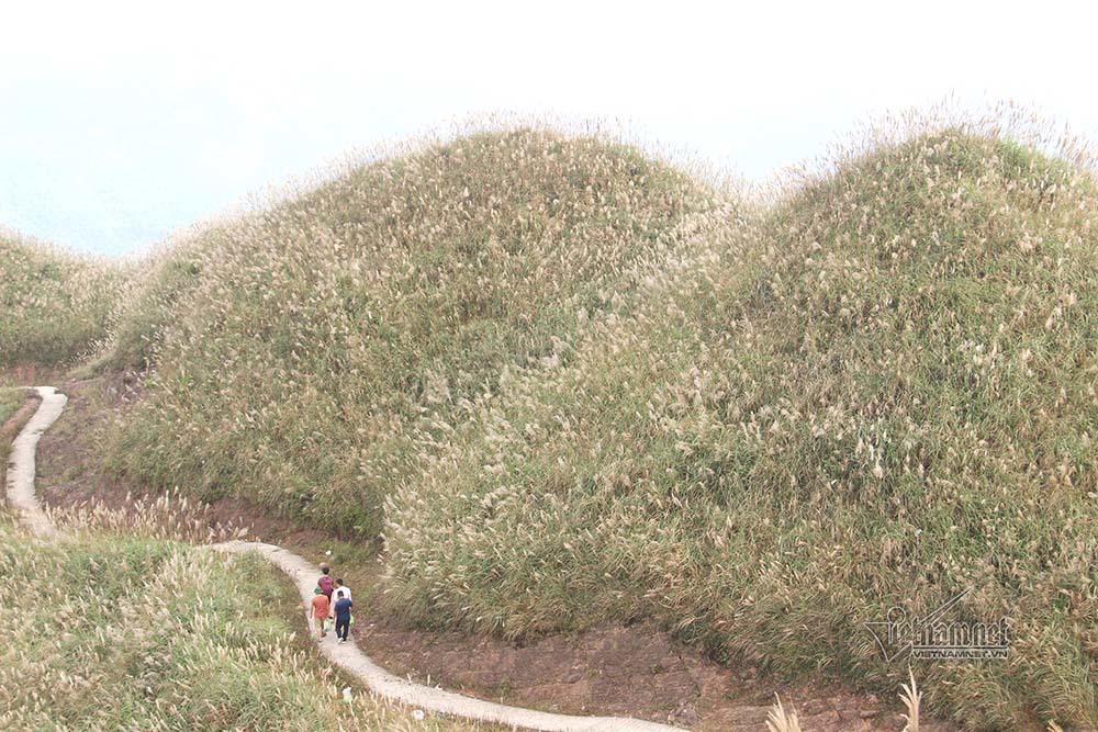 Ngắm hoa cỏ lau tuyệt đẹp trên cung đường lên cột mốc biên giới 1297