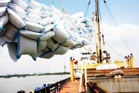 Vietnam's export price of rice suffers dramatic decrease