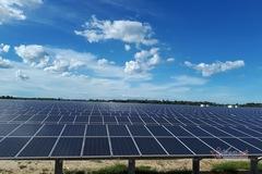 Đấu thầu điện mặt trời, năng lượng sạch vô tận giá rẻ hơn