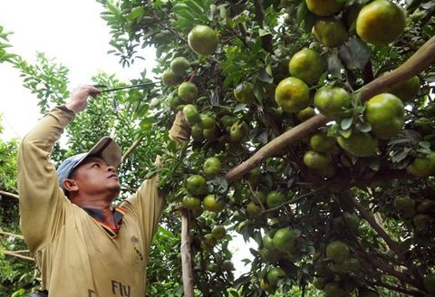 Vietnam's Mekong Delta needs to be innovative to overcome climate change: experts