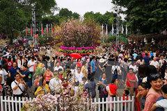 Japanese cherry blossom festival to be held in Hanoi