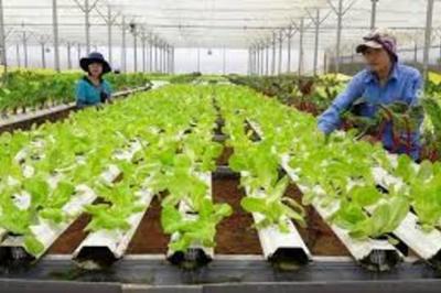 Thủ tục xin dự án đầu tư nông nghiệp công nghệ cao