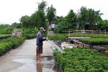 Flower villages in Vietnam's Mekong Delta prepare for Tet holiday market
