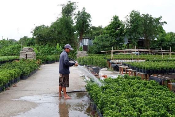 Flower villages,Mekong delta,Tet holiday market,ornamental plant,Sa Dec,Cho Lach