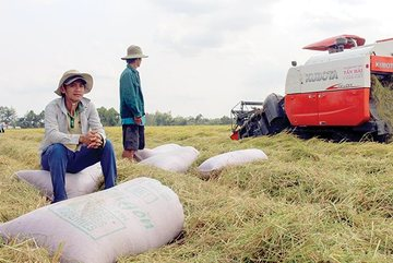 Vietnamese firms struggle to export more farm produce to China