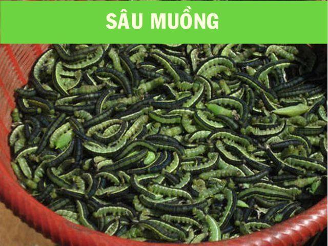 Hoảng hồn nếm thử loạt đặc sản 'độc, lạ, dị' dọc miền đất nước Sau-mong
