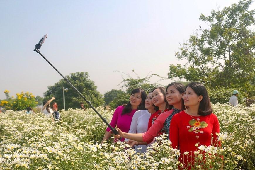 daisy,Hanoi,Cuc hoa mi,winter,Vietnam,DAISY GARDEN IN HANOI