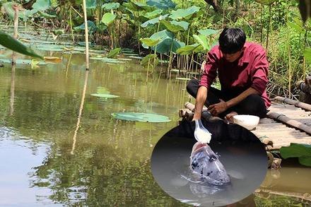 Đút từng thìa cơm cho đàn cá ăn, tiết lộ bí mật từ thời ông truyền lại