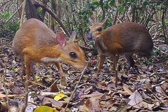 Động vật tưởng tuyệt chủng gần 30 năm bất ngờ xuất hiện ở Việt Nam