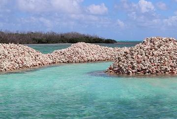 Hòn đảo được tạo nên từ hàng triệu vỏ ốc xà cừ