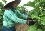 Organic farms fuel sustainable development