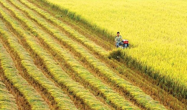 VN gets help with rice cultivation