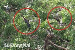 Endangered 500 snakebirds discovered in Dong Nai