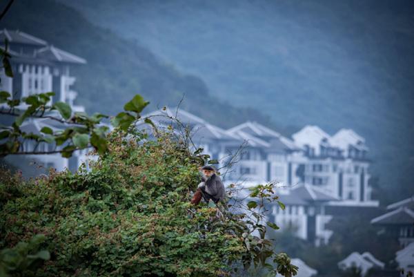 Khu nghỉ dưỡng 'sinh ra để giành giải thưởng' ở Đà Nẵng
