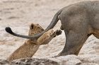 Những hình ảnh ngộ nghĩnh về thế giới động vật