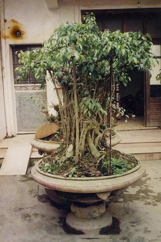 Hành trình từ bụi cây dại đến siêu phẩm 'mâm xôi con gà' Hanh-trinh-tu-bui-cay-dai-den-sieu-pham-mam-xoi-con-ga-3