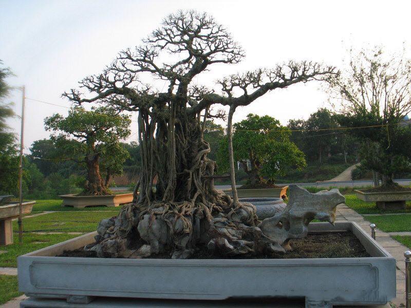 Hành trình từ bụi cây dại đến siêu phẩm 'mâm xôi con gà' Hanh-trinh-tu-bui-cay-dai-den-sieu-pham-mam-xoi-con-ga-4