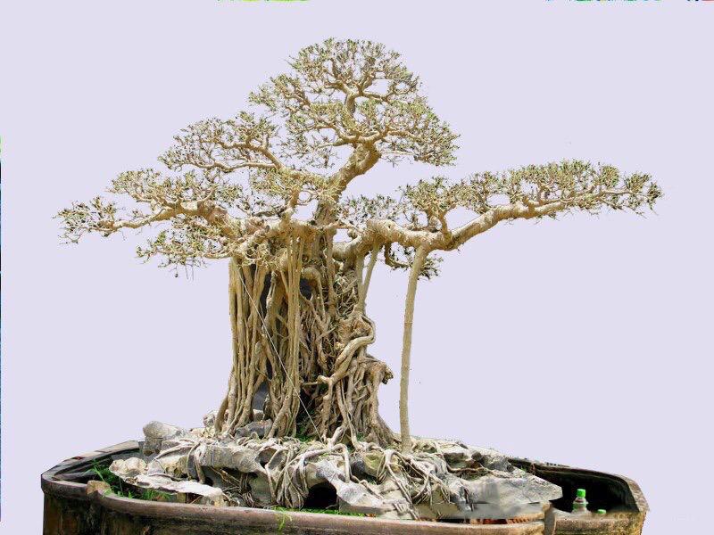 Hành trình từ bụi cây dại đến siêu phẩm 'mâm xôi con gà' Hanh-trinh-tu-bui-cay-dai-den-sieu-pham-mam-xoi-con-ga-5