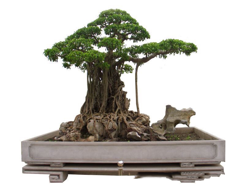 Hành trình từ bụi cây dại đến siêu phẩm 'mâm xôi con gà' Hanh-trinh-tu-bui-cay-dai-den-sieu-pham-mam-xoi-con-ga-6